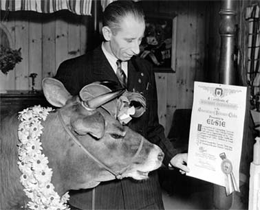Hal Rogers presenting an honorary Kinsmen membership to Bessie the Cow